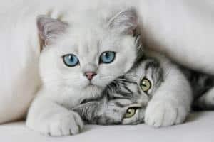 Kedilerin Bilinmeyenleri