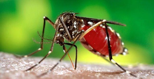 Zika virüsü sanılandan daha korkutucu