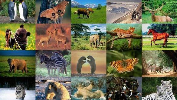 Hayvanların bilinmeyen özellikleri